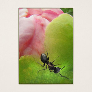 The Ant and the Peony ATC Business Card