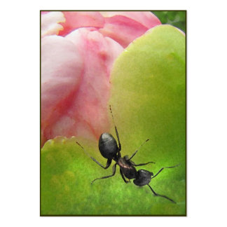 The Ant and the Peony ATC Large Business Card