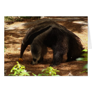 The Anteater Card