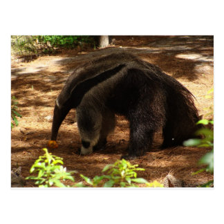 The Anteater Postcard