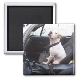 The Anti Michael Vick 2 Inch Square Magnet