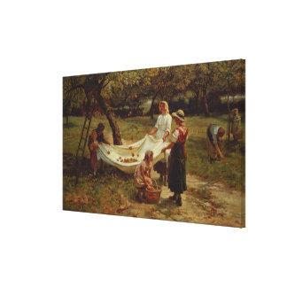 The Apple Gatherers, 1880 Canvas Print
