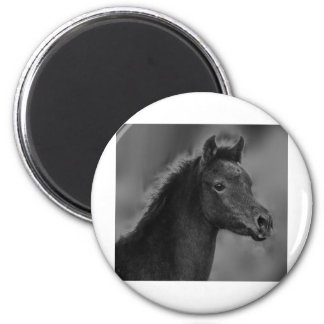 The Arabian Filly Refrigerator Magnets