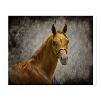 The Arabian Filly Postcard
