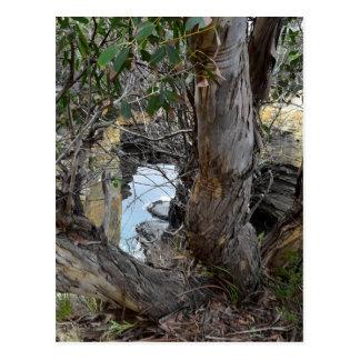 THE ARCH TASMANIA AUSTRALIA POSTCARD
