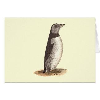 The Arctic Puffin(Mormon arcticus) Greeting Card