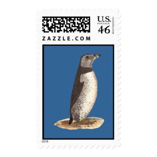 The Arctic Puffin Mormon arcticus Stamp