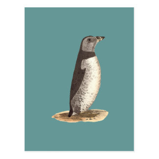 The Arctic Puffin(Mormon arcticus) Postcard
