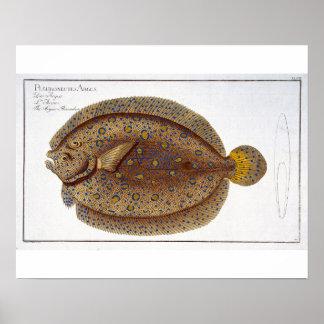 The Argus Flounder (Pleuronectes Argus) plate XLVI Poster