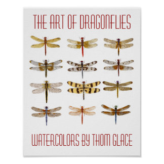 The Art Of Dragonflies Poster