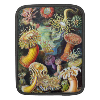 the Art of Nature by Ernst Haeckel iPad Sleeves