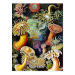 the Art of Nature by Ernst Haeckel Postcards