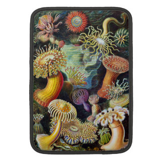 the Art of Nature by Ernst Haeckel Sleeves For MacBook Air