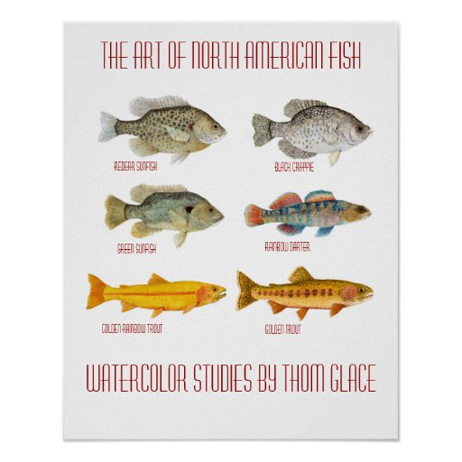 The art of north american fish poster zazzle for North american freshwater fish