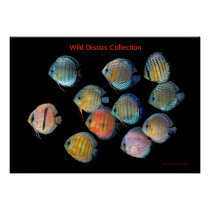 The Art of Wild Discusfish Poster