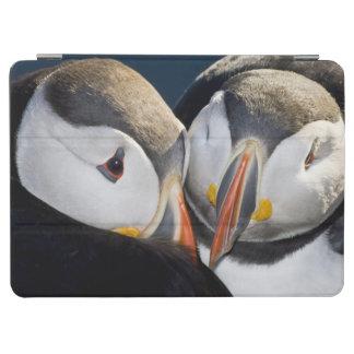 The Atlantic Puffin a pelagic seabird shown 3 iPad Air Cover