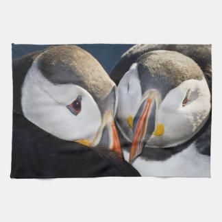 The Atlantic Puffin, a pelagic seabird, shown 3 Hand Towels