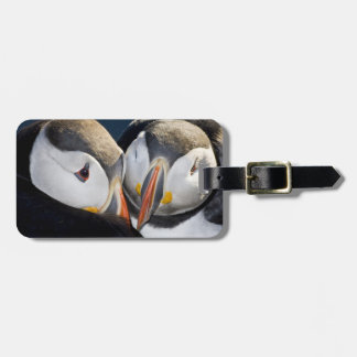 The Atlantic Puffin, a pelagic seabird, shown 3 Tag For Luggage
