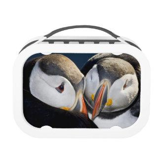 The Atlantic Puffin, a pelagic seabird, shown 3 Yubo Lunchboxes