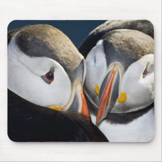 The Atlantic Puffin, a pelagic seabird, shown 3 Mouse Pads