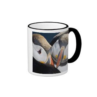 The Atlantic Puffin, a pelagic seabird, shown 3 Coffee Mugs
