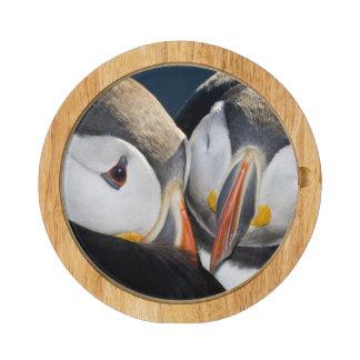 The Atlantic Puffin, a pelagic seabird, shown 3 Round Cheese Board