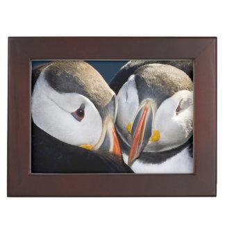 The Atlantic Puffin, a pelagic seabird, shown 3 Memory Boxes