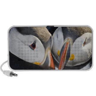 The Atlantic Puffin, a pelagic seabird, shown 3 Travel Speaker