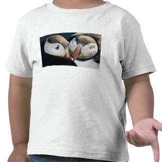 The Atlantic Puffin, a pelagic seabird, shown 3 Shirt