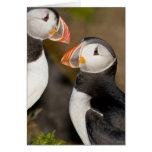 The Atlantic Puffin, a pelagic seabird, shown Greeting Cards