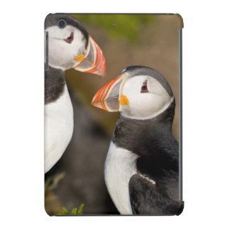 The Atlantic Puffin, a pelagic seabird, shown iPad Mini Covers
