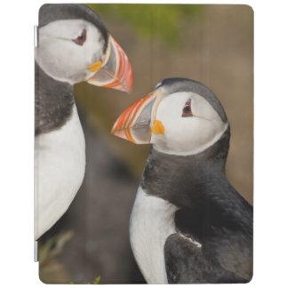 The Atlantic Puffin a pelagic seabird shown iPad Cover