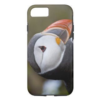 The Atlantic Puffin, a pelagic seabird, shown iPhone 7 Case