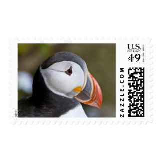The Atlantic Puffin, a pelagic seabird, shown Postage
