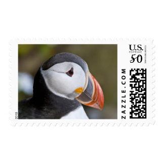 The Atlantic Puffin, a pelagic seabird, shown Postage