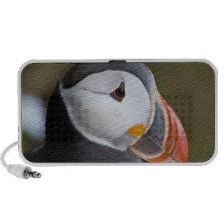 The Atlantic Puffin, a pelagic seabird, shown Portable Speakers