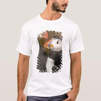 The Atlantic Puffin, a pelagic seabird, shown T-Shirt