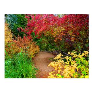The Autumn Path Postcard
