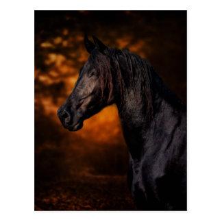 The Autumn Stallion Postcard