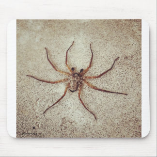 the baby to spider mousepads