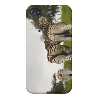 The backside of three zebras, South Africa iPhone 4/4S Case