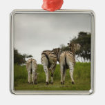 The backside of three zebras, South Africa Ornament