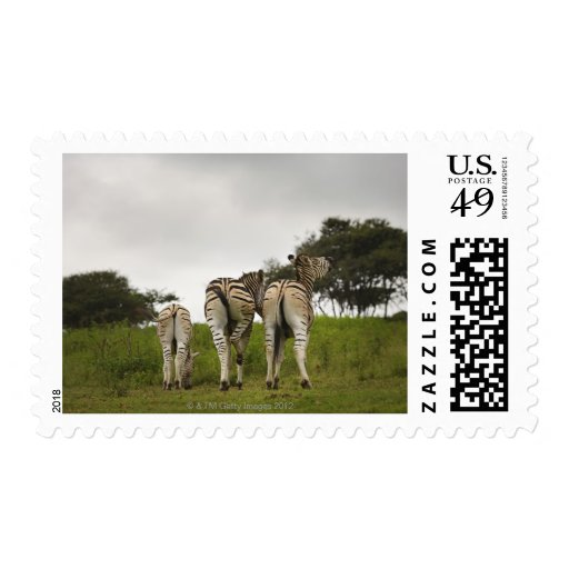 The backside of three zebras, South Africa Postage