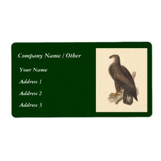 The Bald Eagle Haliaetos leucocephalus Shipping Labels