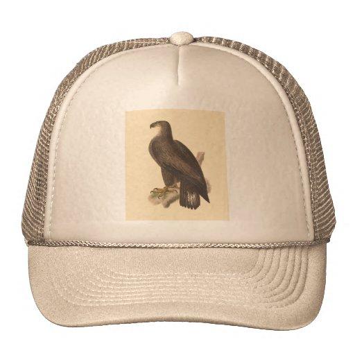 The Bald Eagle (Haliaetos leucocephalus) Mesh Hats