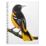 The Baltimore Oriole Bird Notebook