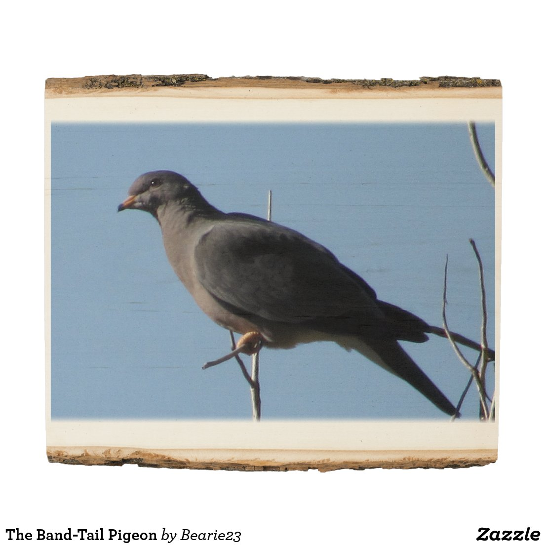 The Band-Tail Pigeon Wood Panel