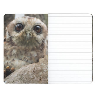 The Bare-legged Owl Or Cuban Screech Owl Journal