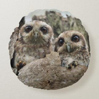 The Bare-legged Owl Or Cuban Screech Owl Round Pillow