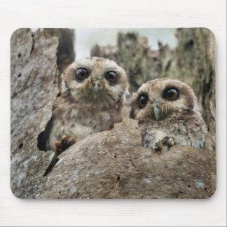 The Bare-legged Owl Or Cuban Screech Owl Mouse Pad